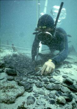 thumb_Henderson_Graeme_shipwreck_web.jpg